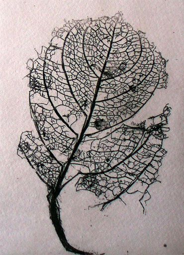 Copper plate etching of slug-eaten leaf. waxoil.com