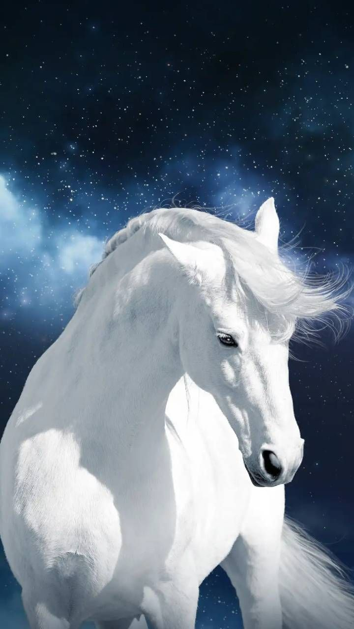 Download White Horse Wallpaper By Georgekev Fe Free On Zedge