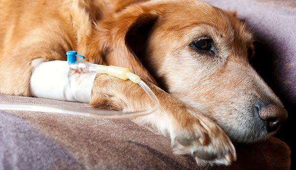 Dog Dangers: Common Allergy Medications that are Poisoning Our Pets