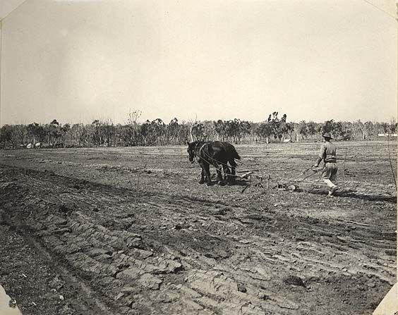 Image | [Kentucky Soldiers' Settlement Estate - ploughing a field][Kentucky Soldiers' Settlement Estate - ploughing a field][Kentucky Soldiers' Settlement Estate - ploughing a field]