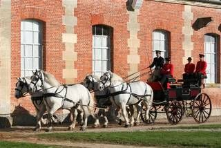 Spectacle de chevaux en Normandie, spectacle équestre tous les jeudis et mardis : Le Haras National du Pin
