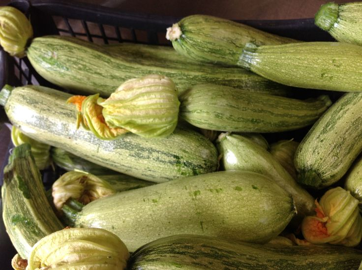 Le zucchine dell'orto di Montefabbrello