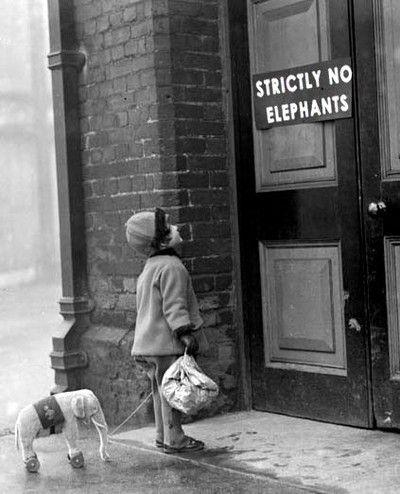 disappointment: Toys Elephants, Baby Elephants, Minis Elephants, Elephant Baby