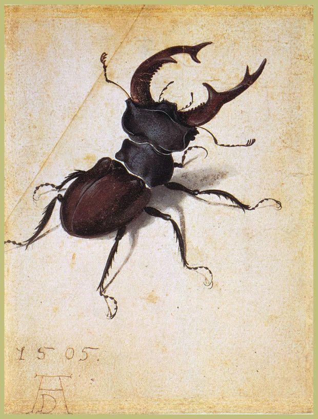 Albrecht Durer, Cervus Lucanus, 1505, J.Paul Getty Museum, Los Angeles