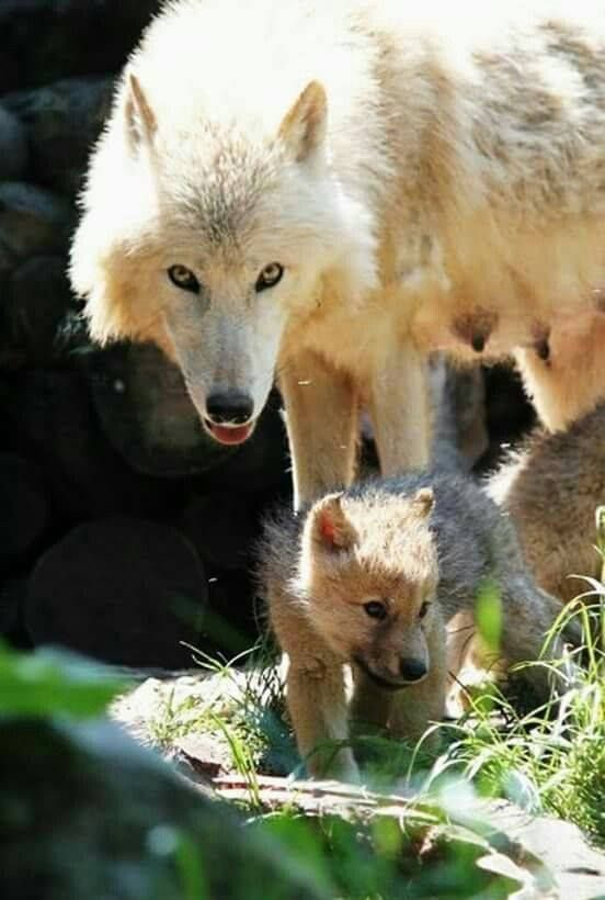 Mother & Pup