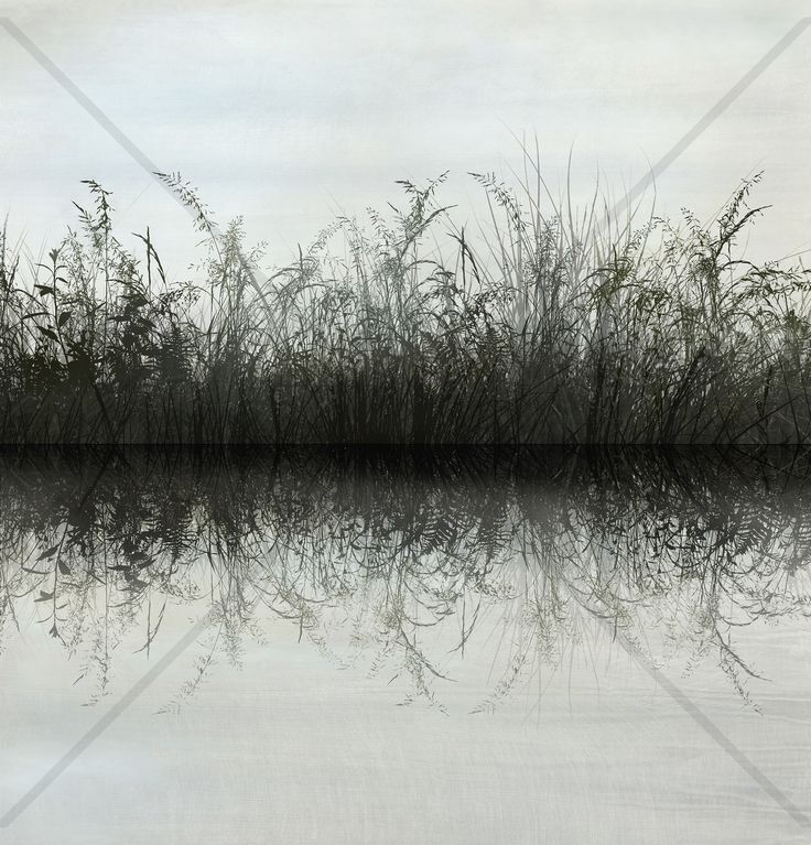 Grass Water Reflection - Fototapeter
