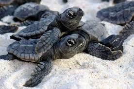 Resultado de imagen para tortugas lindas y tiernas