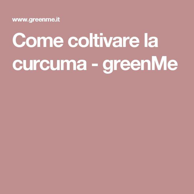Come coltivare la curcuma - greenMe