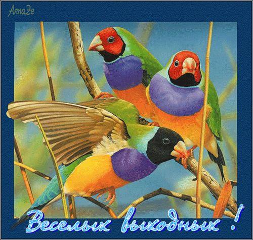 анимационные открытки с выходными 4 - clipartis Jimdo-Page ...