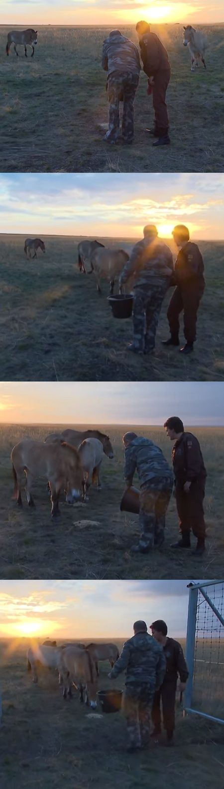 Putin Visits Reserve For Wild Horses And Sets 6 Of Them Free! (VIDEO) #putin #horses #wildlife #animals