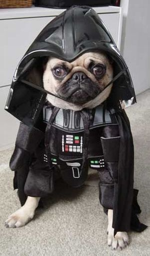 Everything Darth Vader