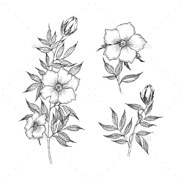 Vintage Botanical Illustration Flower Botanical Illustration Vintage Flower Line Drawings Wildflower Drawing