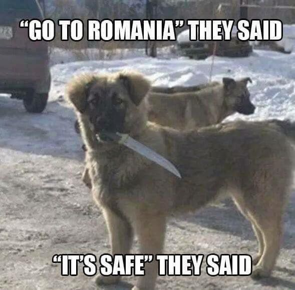 Go To Romania They said!