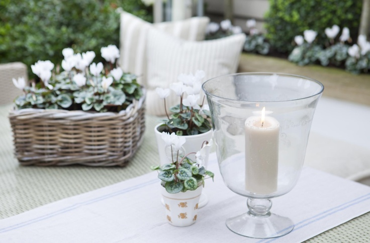 Leopoldina Haynes Garden: white cyclamins and storm lantern