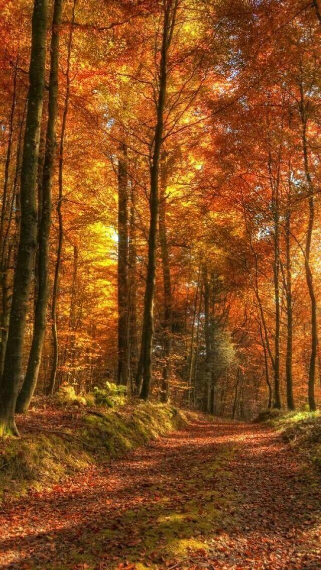 Autumn captured in Amber