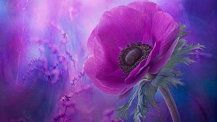 ᗋ‧:•★•: Լ...Michel Pépé - Fleur d'amour