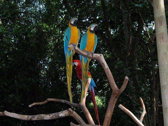 pino l - Brasile,Iguacu - Recensioni dell'utente - TripAdvisor