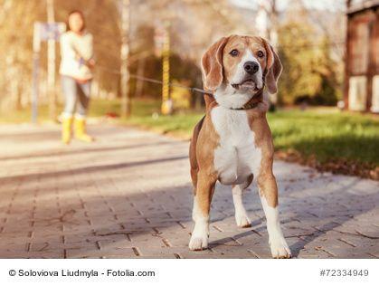 Überlegst Du Deinen Hund kastrieren zu lassen? Dann lies zuerst das hier!