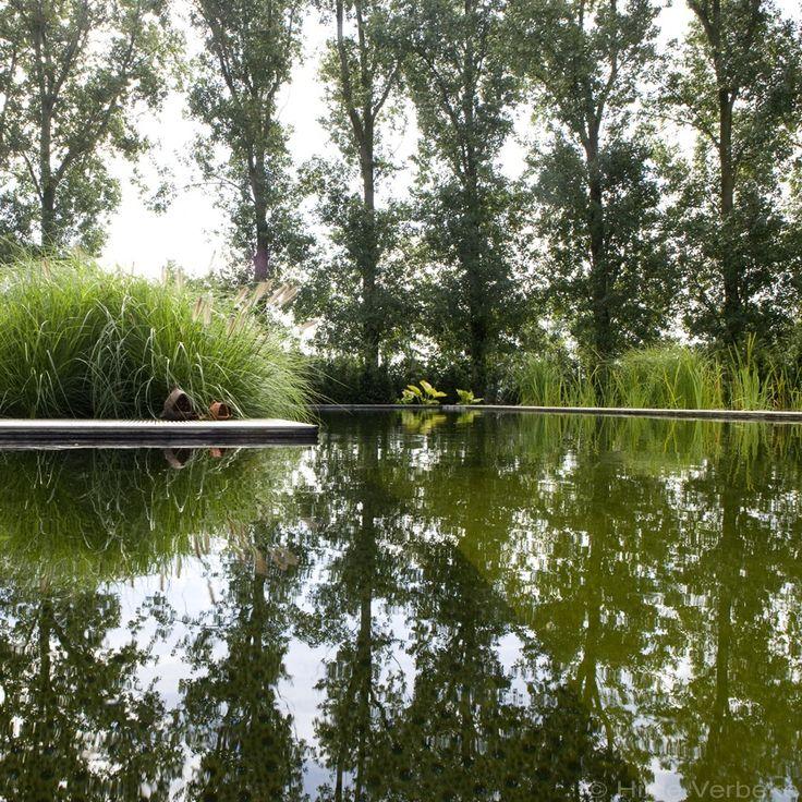 Zwemvijver in L-vorm in landelijke tuin met cederhouten poolhouse