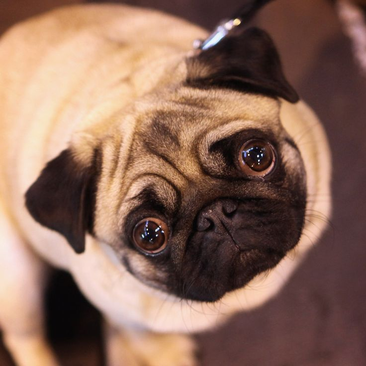 Good News, Fur Mamas: Talking to Your Pet Is a Sign of Intelligence | Brit + Co