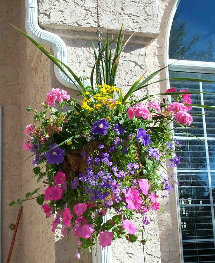 Growing Hanging Flower Baskets : Best images about hanging baskets on