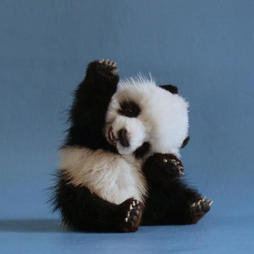 Baby PandaCutest Baby, High Five, Pandas Baby, Baby Pandas, Animal Pictures, Hands, Pets, Pandas Bears, Baby Animal