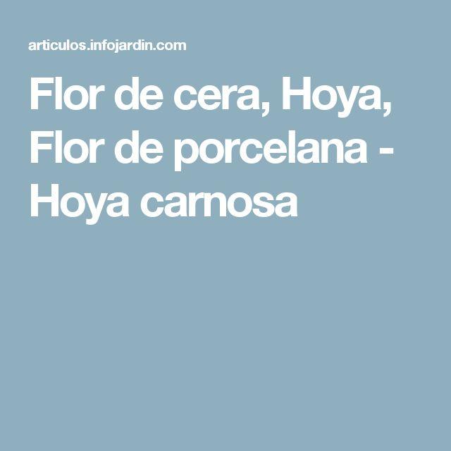 Flor de cera, Hoya, Flor de porcelana - Hoya carnosa