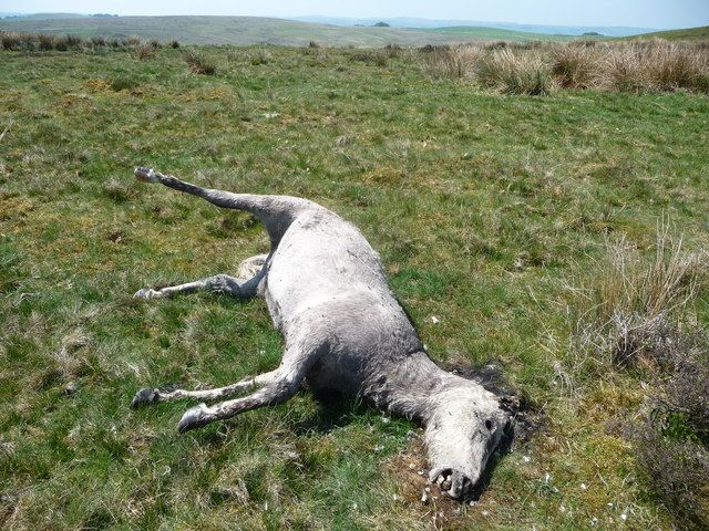 Prosecute Animal Owner for Leaving Pregnant Pony to Die - PLEASE SIGN : http://forcechange.com/61952/prosecute-animal-owner-for-leaving-pregnant-pony-to-die/