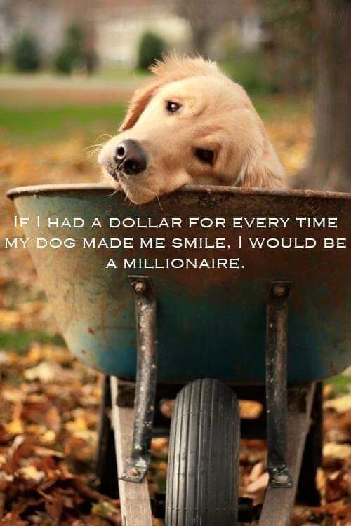 """If I had a dollar for every time my dog made me smile, I would be a millionaire."" #petquotes"