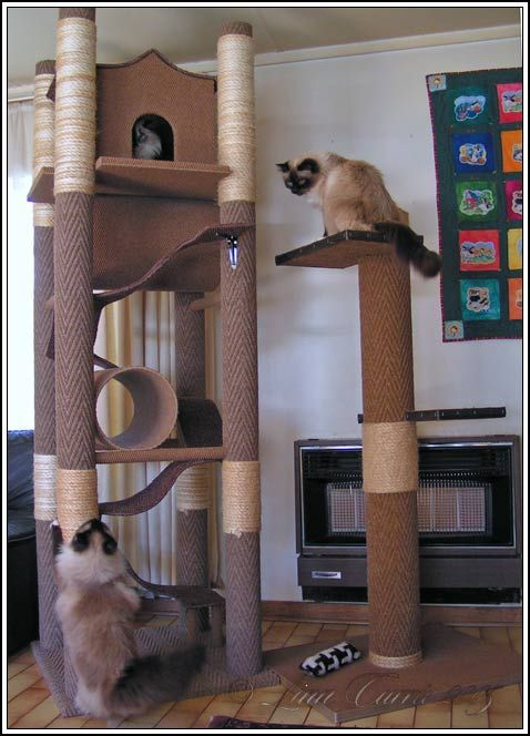 diy cat tree   Here are some examples of kitty jungle gyms we designed and built