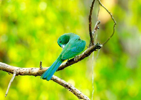 Cat Tien National Park an ecotourism paradise in #Vietnam