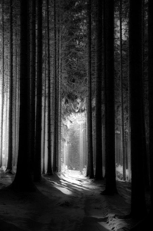 Dit kunstwerk heeft een licht-donker-contrast. De bomen zijn donker afgebeeld en de achtergrond licht, waardoor er diepte ontstaat.