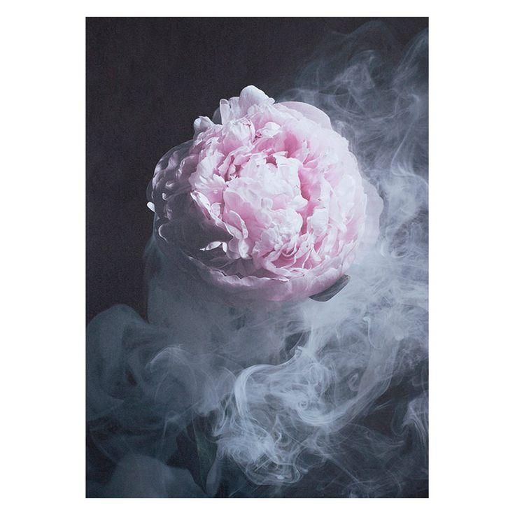 Pre Order | Enchanted Wall Art | Unframed | The Block Shop