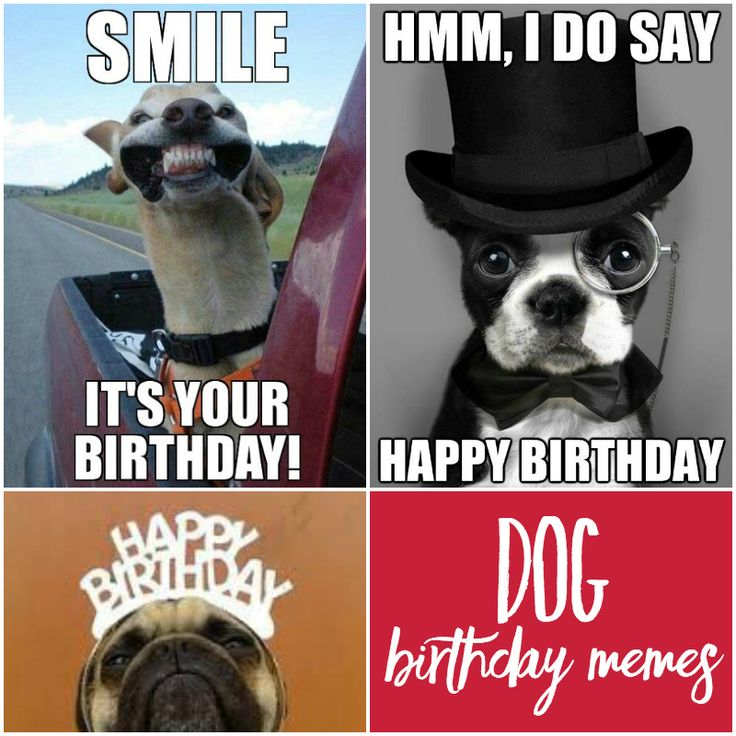 Dog Birthday Meme The Best Birthday Memes for Everyone