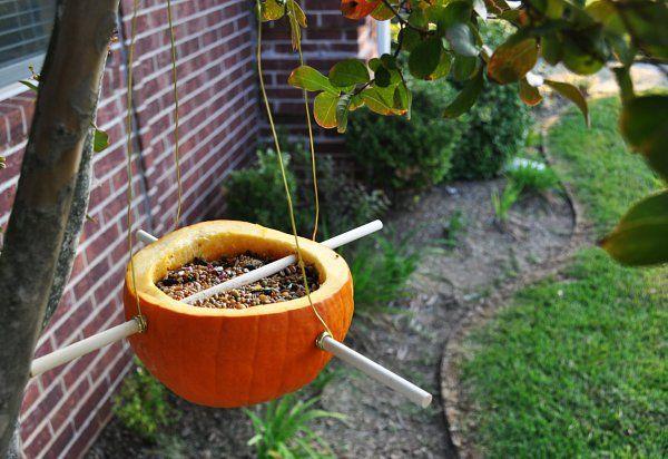 Turn your pumpkin into a birdfeeder