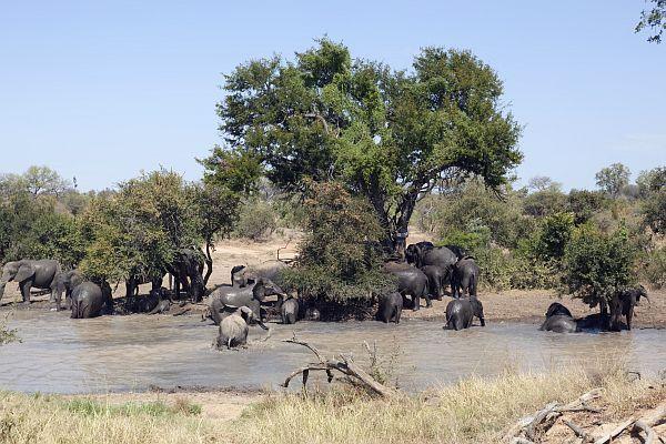 Limpopo è una destinazione ricca di natura selvaggia con molte riserve naturali e safari incluso il nord del Kruger National Park. Oltre all'osservazione degli animali e degli uccelli, il Limpopo ospita i resti di antiche culture e l'intrigante cultura Venda, impregnata di miti e leggende.