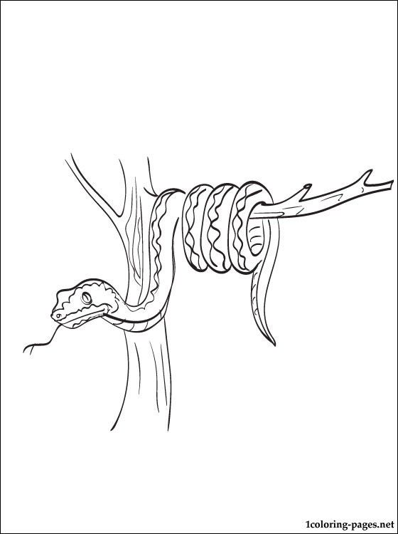 11 best snakes ewwwwwwwwwww images on pinterest snakes coloring snake coloring page to print out coloring pages sciox Image collections