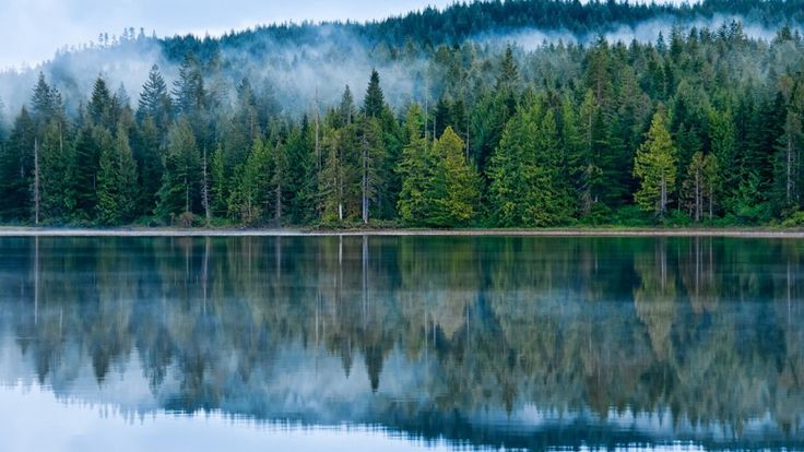 Reflection On The Lake Pine Forest Fog Hd Desktop Wallpaper ...