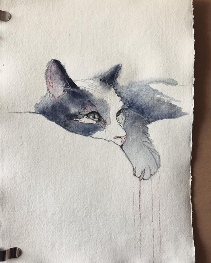 #sineadlawless #watercolour #cat #sketch #painting #art
