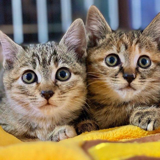 魚を焼く匂いにつられて庭に現れた子猫姉妹 保護したらおてんば 慎重派に成長 まいどなニュース Yahoo ニュース 子猫 おてんば キャットフード