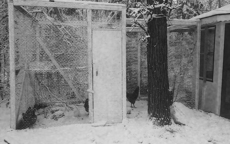 Our Chicken Coop. Road Island Reds enjoying a beautiful Canadian winter