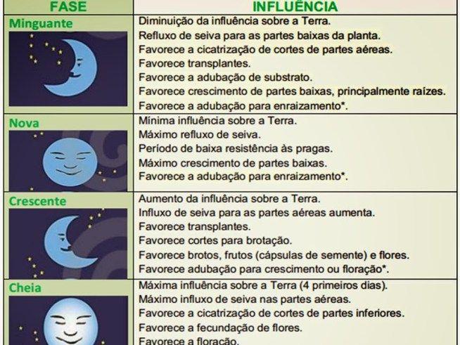 Fases Da Lua Fases Da Lua Calendario Das Luas Lua