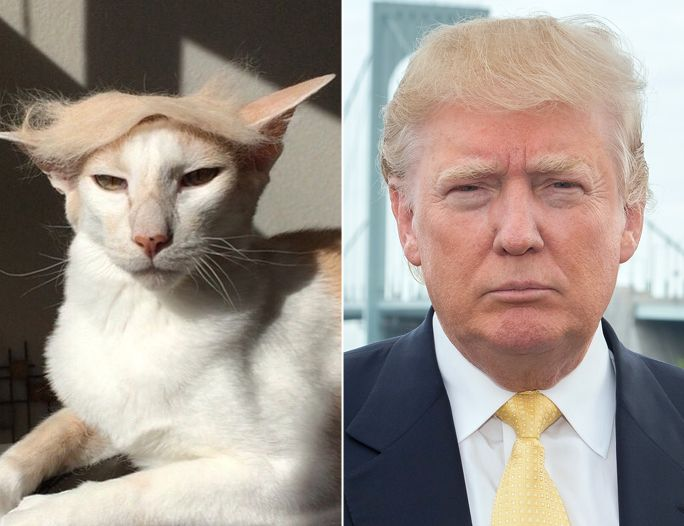 Does Trump Have A Dog Or Cat