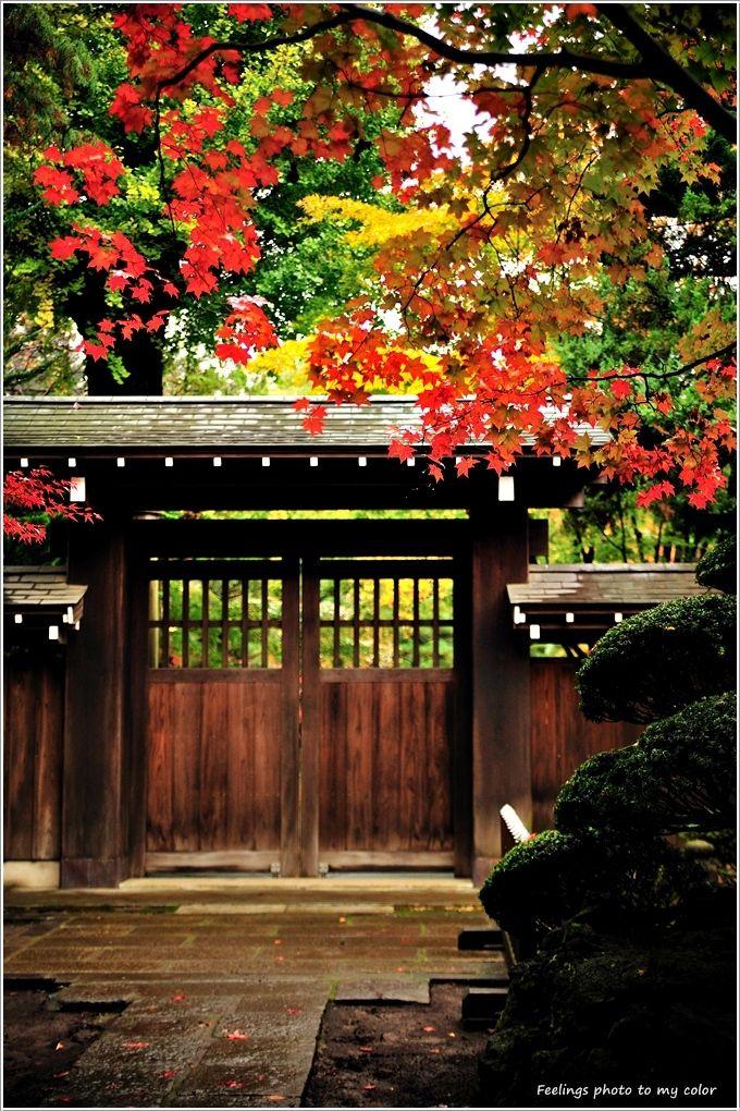 Autumn leaves of Heirin-ji, Saitama, Japan: photo by kiyo3292