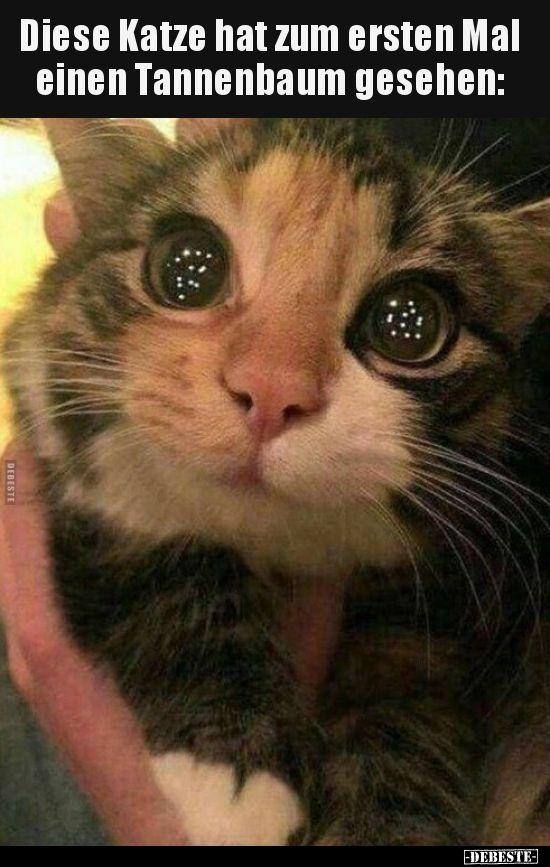 Diese Katze hat zum ersten Mal einen Tannenbaum.. | Lustige Bilder, Sprüche, Witze, echt lustig – E G