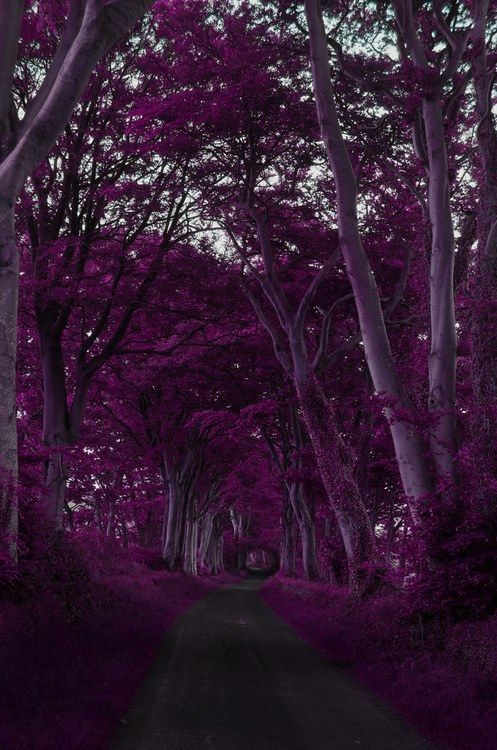 Purple Forest, Scotland photo via viktor. Ahh two of my favorite things!!!! My favorite color and place <3