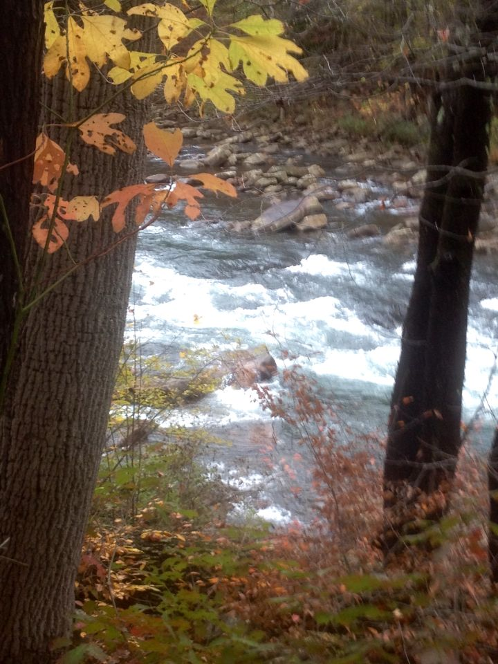 48 best wv oh md and pa trout streams images on pinterest for Best trout fishing in pa