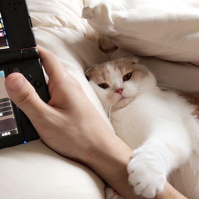 お前…可愛すぎるやろ…😍 #ねこ #猫 #愛猫 #猫カフェ #モンハン #ダブルクロス #フォロワー募集中  #東京 #新宿 #滋賀県