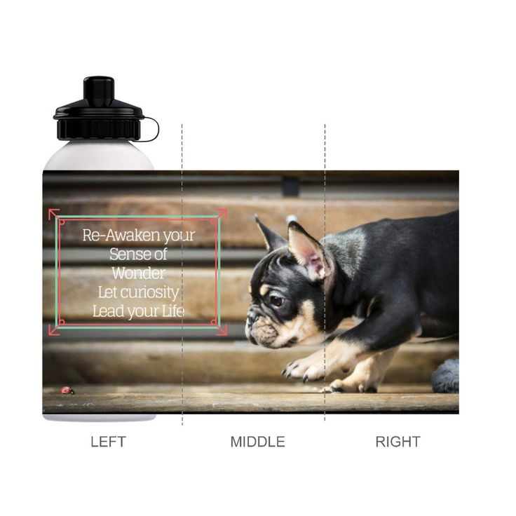 Refillable Water Bottle with French Bulldog Puppy