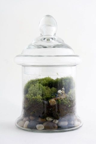 Brave New World by Twig Terrarium | twigterrariums